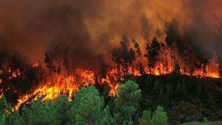 Newsletter For Future- Edition 2- Ready to take action- wildfires in Honduras