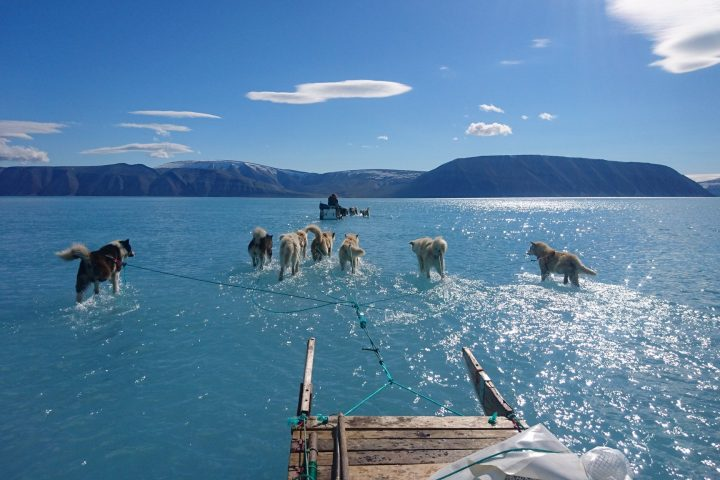 Sled dogs pull a sled through water because all the ice has melted. Greenland